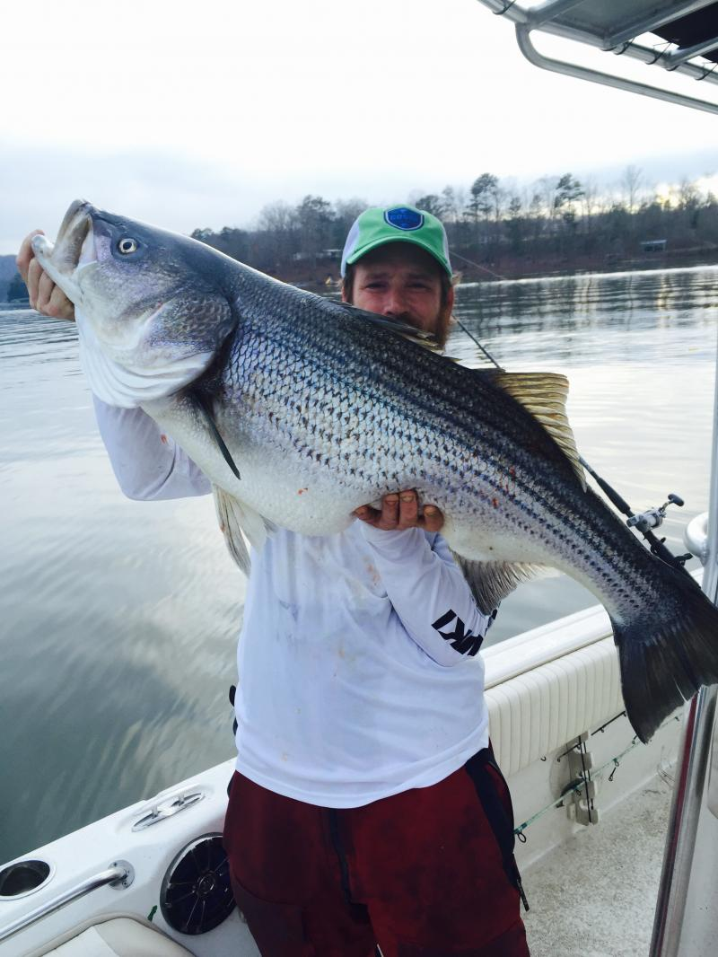 smith lake fishing report smith lake alabama
